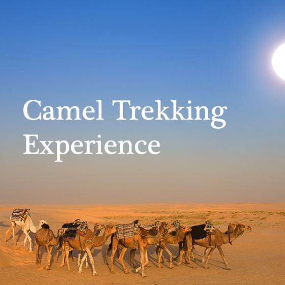 Camel Trekking Experience